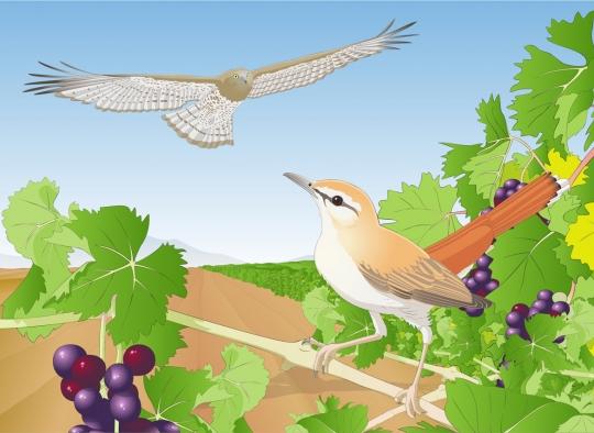 Publicidad Birdfair - Ornitología